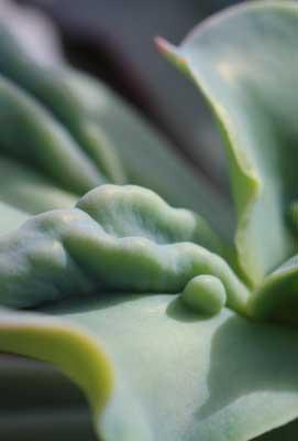 Ottershaw Cacti